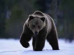 熊①.jpg